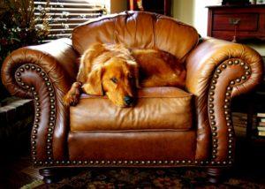 tapizar mobiliario de cuero